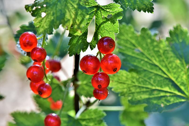 Photo of round red fruits