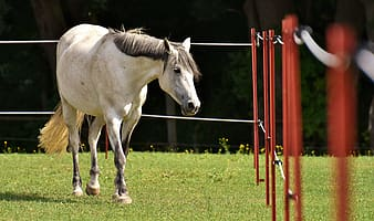 White horse near fence on green grass field