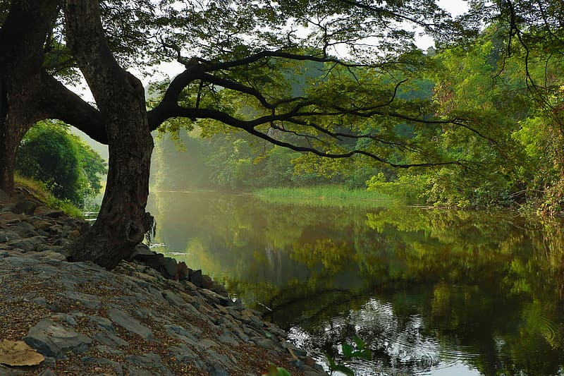 Tree and body of water during daytime