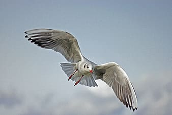 Selective photography of white and black seagull flying during daytime