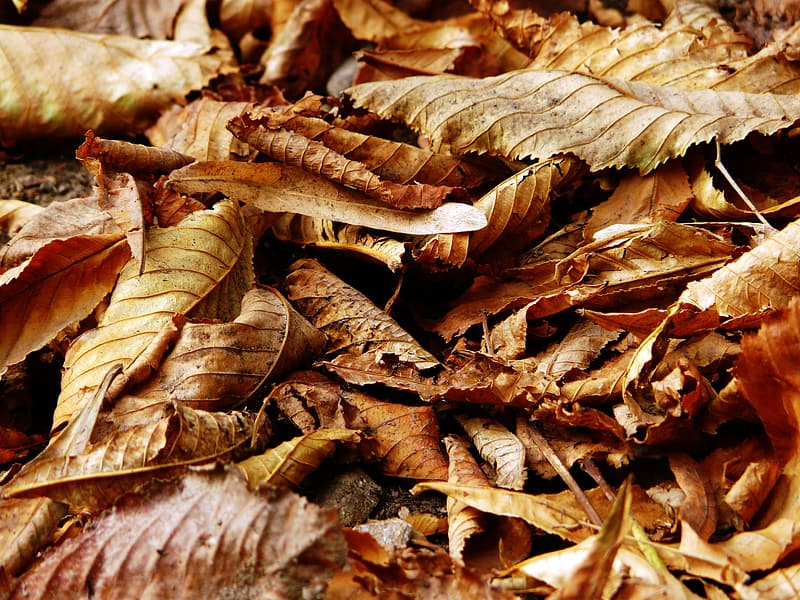 Closeup photography of brown dried leaves