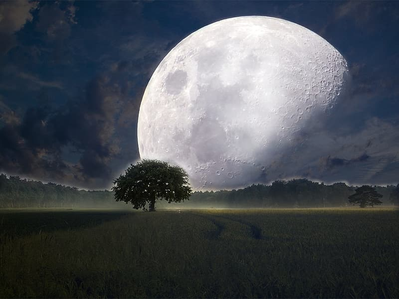 Full moon and silhouette of tree graphic