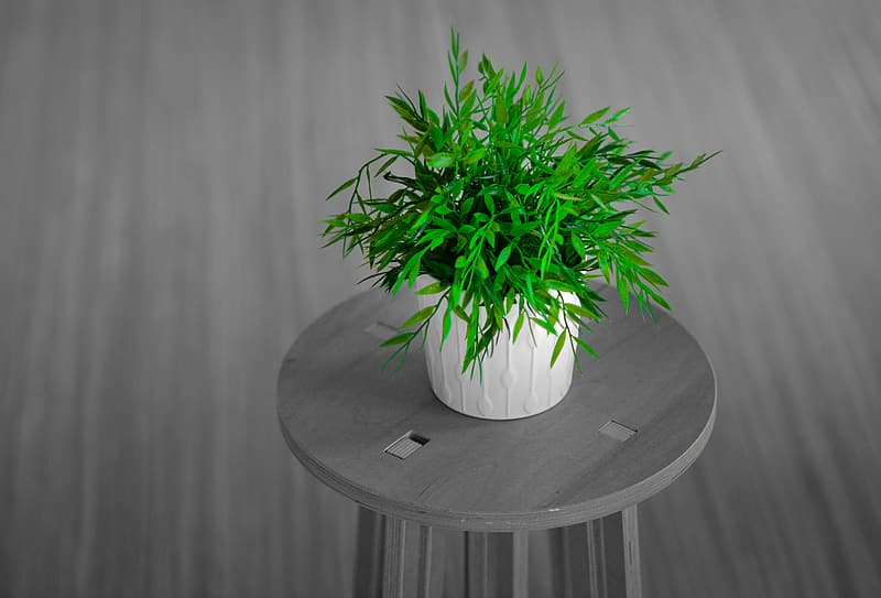 Green potted plant on stool