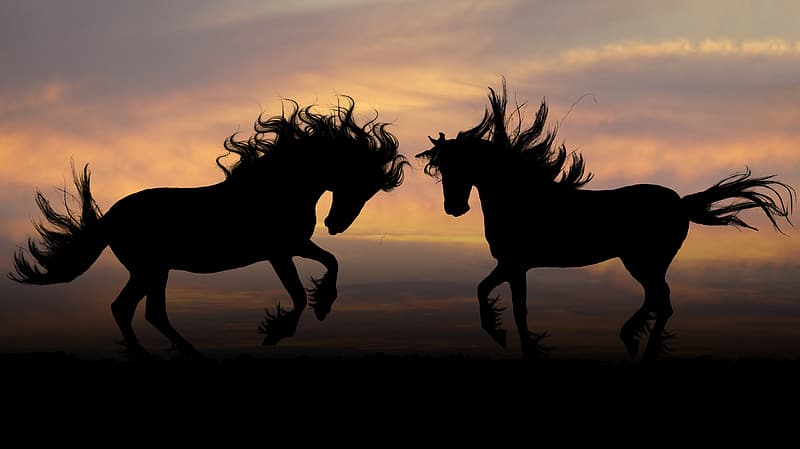 Silhouette photography of two horse during sunset
