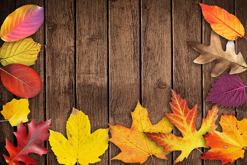 Assorted-color leaf on brown wooden surface