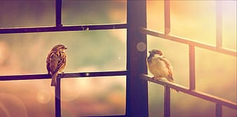 Two small birds and sunlight