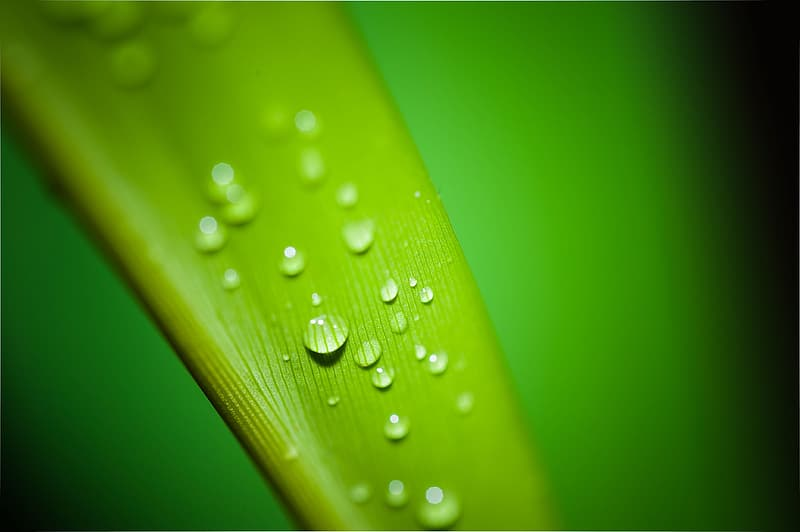 Closeup photography of leaf with dewdrops of water