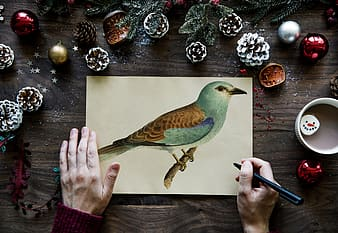Person sketching green and brown bird on beige printer paper on top of brown wooden surface