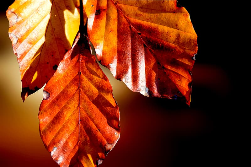 Brown and yellow leaves in close up photography