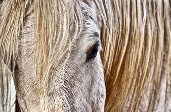 Brown and white horse eye