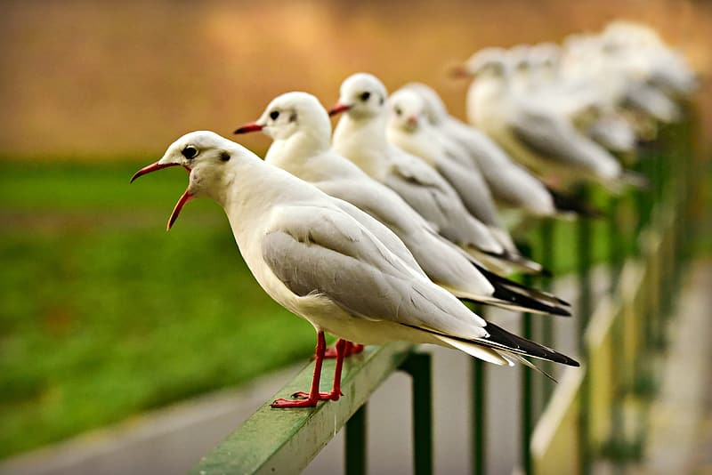 White birds on green metal fence during daytime
