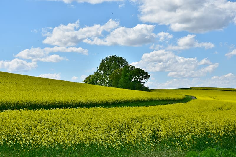 Landscape photography of green grass