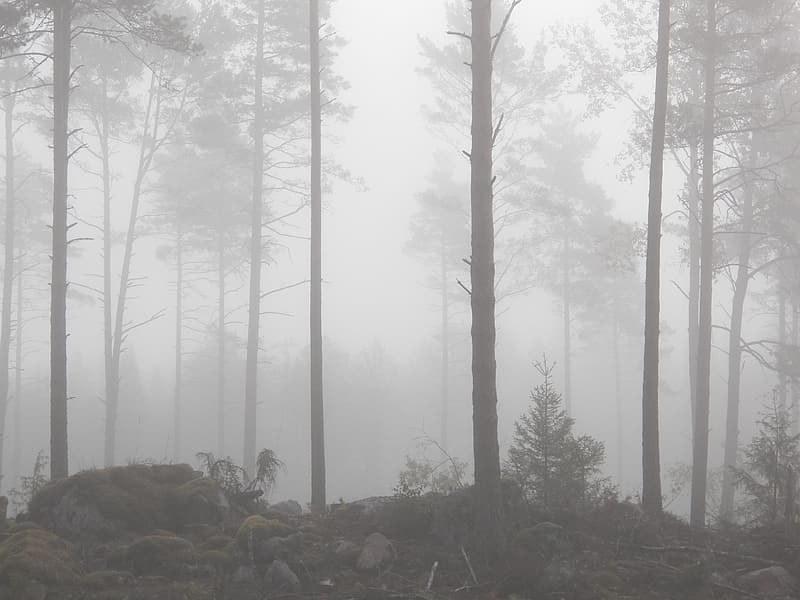 Forest covered with mist