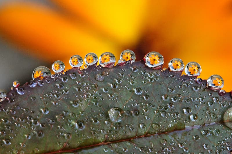 Green leaf plant with droplet of water photography