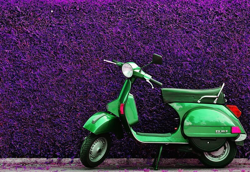 Motor scooter parked beside purple hedge