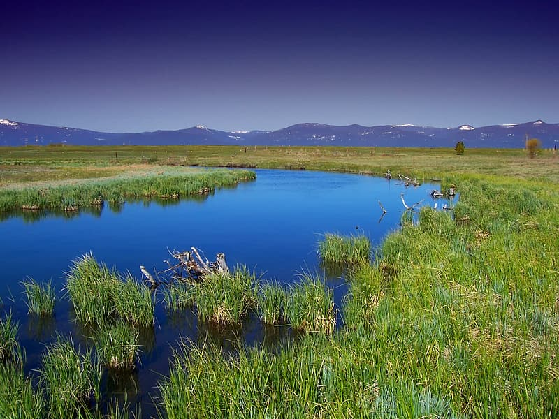 Body of water beside green grass field under clear sky during daytime
