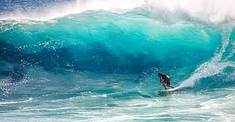 Giant Shark, person surfing photograph