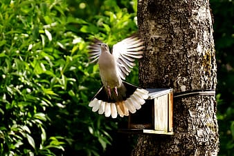Brown and white Dove flying near brown wooden birdhouse during daytime