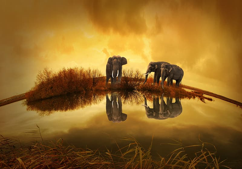 Photography of three elephants under clouds