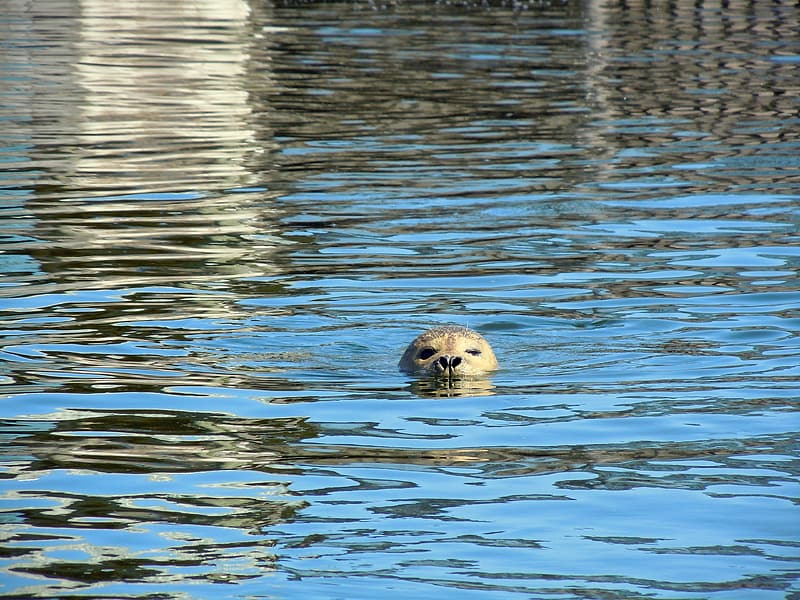 Animal in water