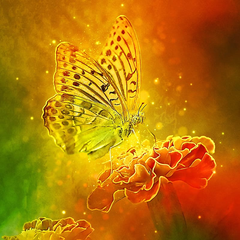 Fritillary butterfly perched on red flower illustration
