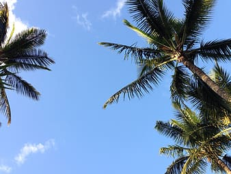 Green coconut tree during daytime