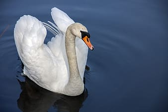 White and gray duck on body of water