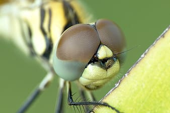 Macro photo of yellow dragonfly perching on yellow leaf