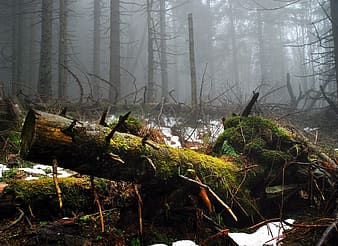 Foggy forest scenery
