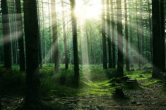Sun piercing through trees photography