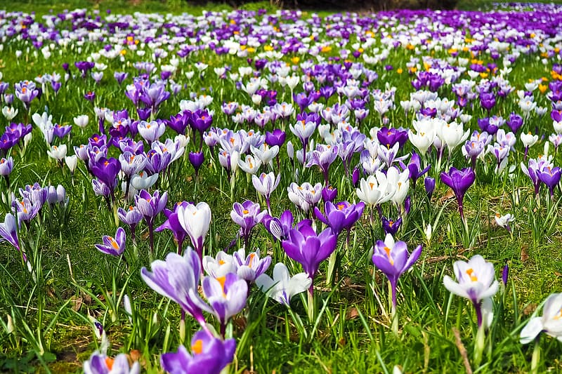 Garden of white and purple petaled flowers