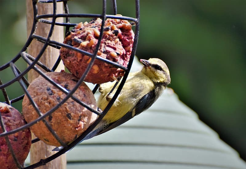 Yellow and black bird on brown steel round rack