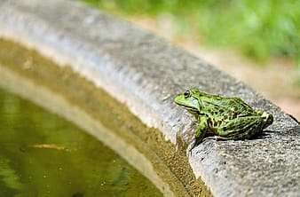 Photo of green and black frog near body of water