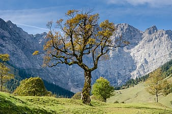 Yellow leaf tree on green grass field near mountains