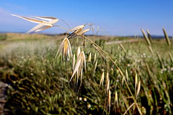 Shallow focus photography of brown grass in grass field during daytime