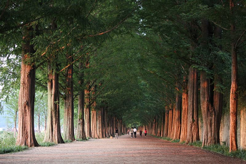 People on gray concrete pathway between green tall trees during daytime