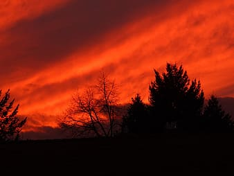 Silhouette photo of bare tree and tall tree below red sky