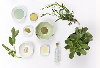 Green potted succulent with glass bottle, and ceramic plates