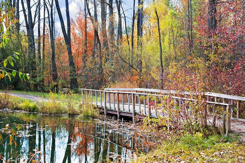 Photo of beige wooden footbridge on body of water near trees and plants