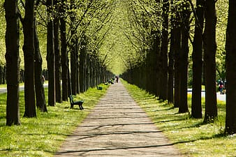 Gray pathway in the middle of green leaf trees