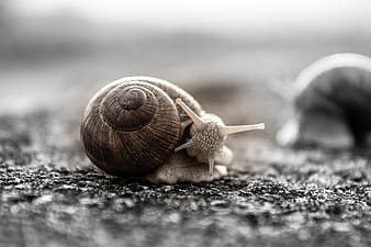 Selective focus photo of brown snail