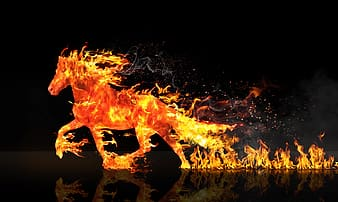 Horse in flame digital wallpaper