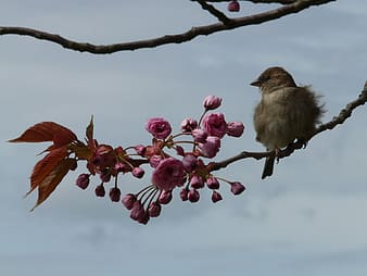 Brown bird on tree branch with flower