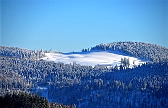 Snow forest during daytime