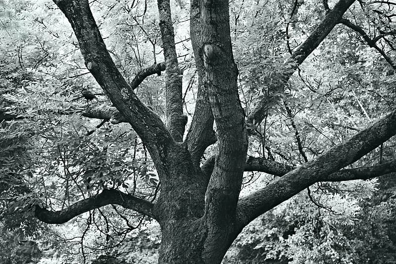 Grayscale photo of tree with leaves