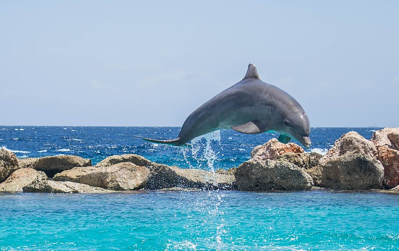 Dolphin leaping on water