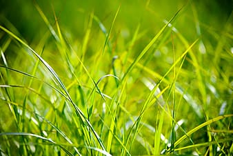 Selective focus photography of green grass blades