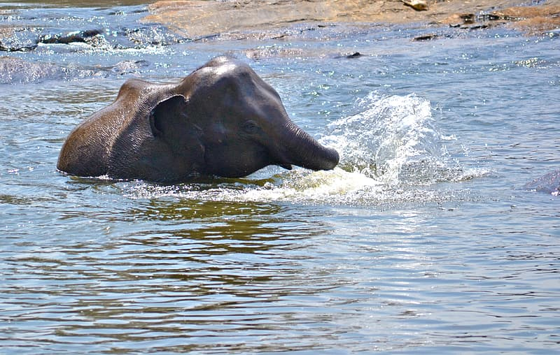 Black elephant on water during daytime
