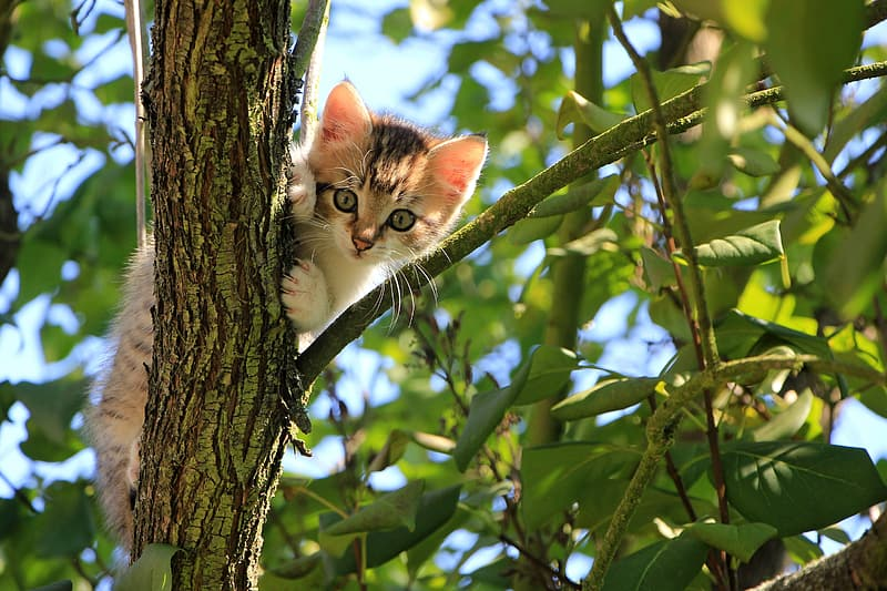 Brown and white kitten on top of tree branch during daytime