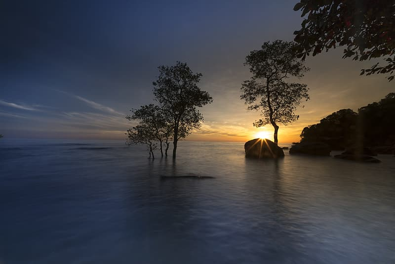 Silhouette photography of trees near body of water